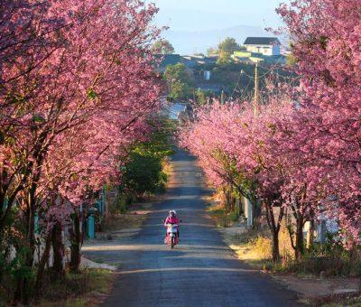 Nên đi du lịch Đà Lạt vào tháng mấy là đẹp nhất?